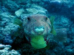 62_11 Diving at Great Barrier Reef, QLD.JPG